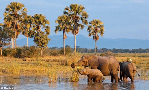 Malawi magic: The secret safari spot where it's just you ...