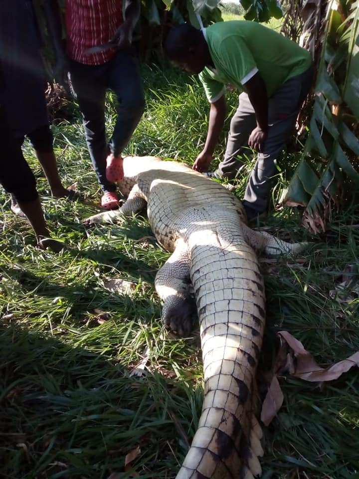 CROCODILE KILLS MAN IN DEDZA (Graphic Pictures)   Face Of ...